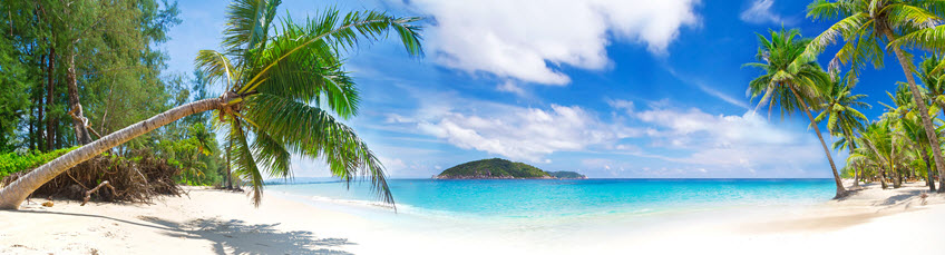 Photo of a beach with palm trees and an island